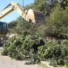 إنطلاق عملية إستبدال أشجار FICUS بشجر النخل بشوارع مختلفة بالمدينة